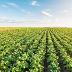 De eigenaar van het klimaatprobleem, de hete aardappel